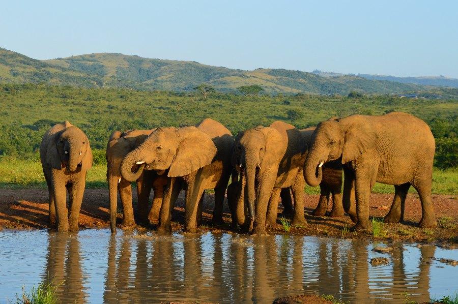 südafrika safari reisebüro flugbörse münchen